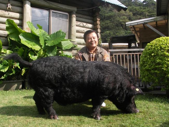 沖縄県産 やんばるブタプラセンタ乾燥末